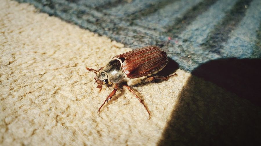 Insect Sunlight