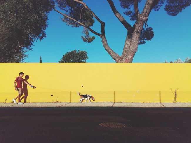 Walking The Week On EyeEem Dogslife Dog Walking Colors Yelow Home Is Where The Art Is Streetphotography Streetart Colour Of Life Two Is Better Than One People And Places