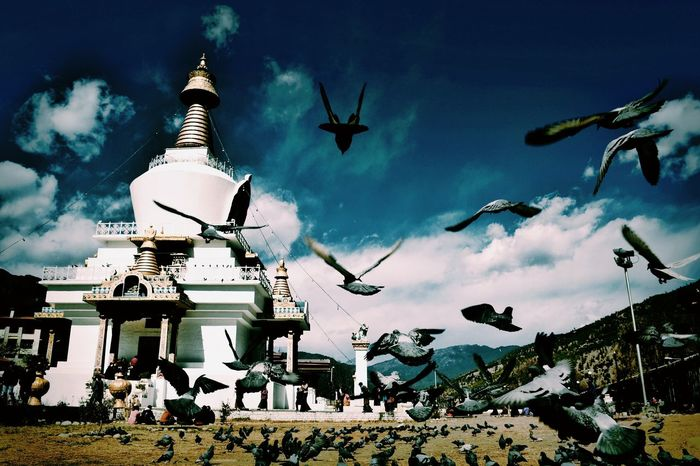 Flying Low Angle View Cloud - Sky Place Of Worship Outdoors Famous Place Eyeemphoto Vacations Livestock Multi Colored Non-urban Scene Building Exterior Huffpostgram Paro Bhutan Artofvisuals Eyeemphotography Nikon D5200 Travelgram Featuremeinstagood Agamesoftones Featuregram Vscocamphotos Tourism Beauty In Nature Monument