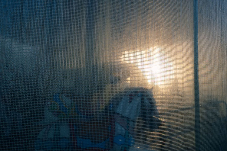 Horse Carroussel Closed Dream Memories Nostalgia Backgrounds Window Textured  Pixelated Curtain Frosted Glass Close-up Glass Calm Shutter Thoughtful Translucent Multiple Exposure Double Exposure