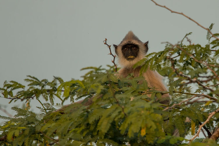 Low angle view of monkey sitting on tree against sky