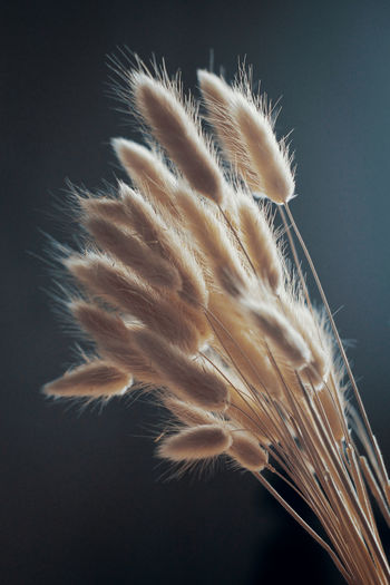 Close-up of white feather against black background