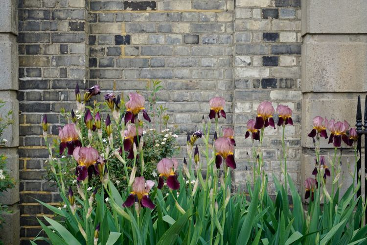 Close-up of flowers growing on brick wall