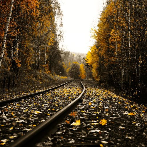Railroad Track Passing Through Forest