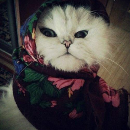 Нашла у подружки в контакте. кошкавшоке русскаякошка павлопасадскийплаток плат