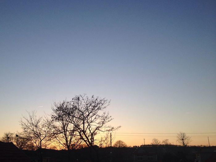 Hello World Sunset Tree