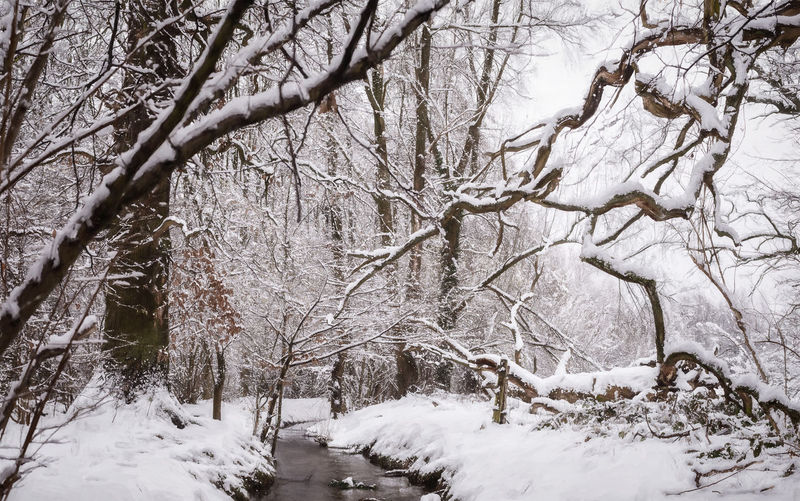 Snow Tree Cold Temperature Winter Branch Plant Bare Tree Beauty In Nature Land No People Tranquility Nature Day Covering Forest Scenics - Nature Tree Trunk Trunk Non-urban Scene Outdoors Blizzard Snowing