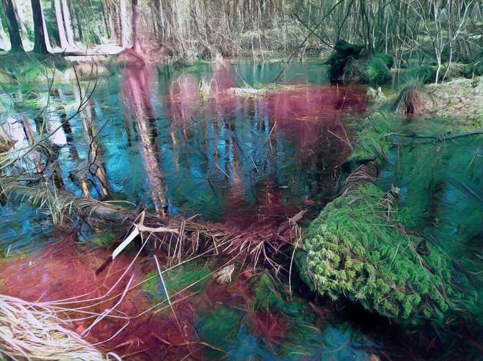 Природа живопись Backgrounds Full Frame No People Day Close-up Textured  Multi Colored Outdoors Tree Выкса First Eyeem Photo болото пасха