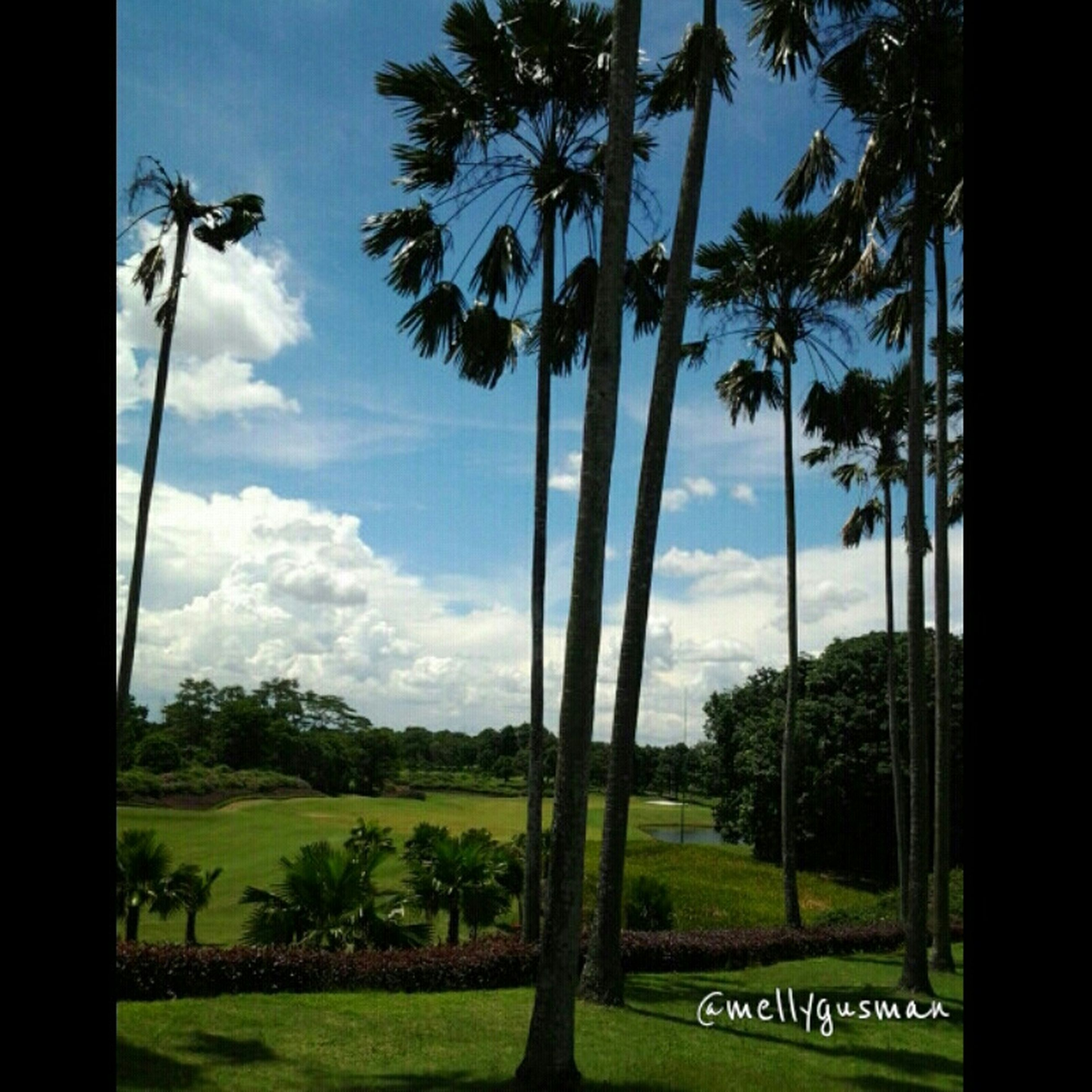 tree, sky, grass, tree trunk, growth, field, tranquility, green color, landscape, cloud - sky, nature, cloud, tranquil scene, palm tree, park - man made space, beauty in nature, scenics, day, transfer print, sunlight