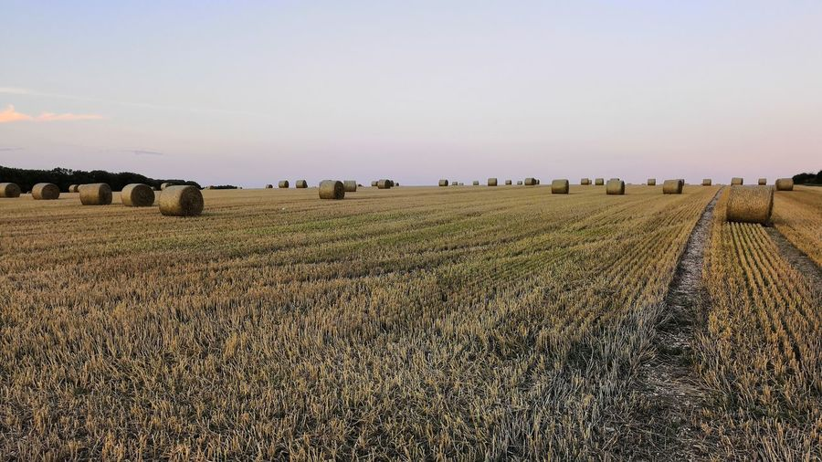 Hay bails Rural Scene Agriculture Field Crop  Farm Sky Landscape Bale
