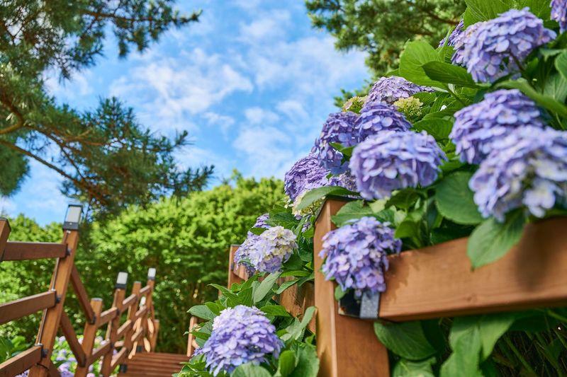 Purple flowering plants against blue sky