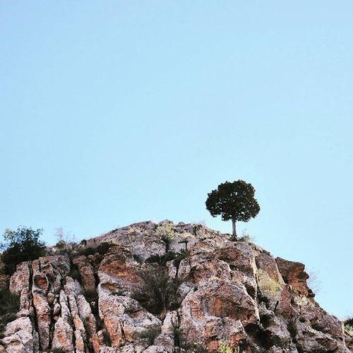 ▫ گاهی دلم میخواد یه همچین چیزی باشم 😐 یه درخت تنها نوک یه کوه بلند! Sometime I wonder it would be a chance to be such a Tree ... . . . - یک درخت که ما بهش میگیم آرچا، روی قله ی یه کوه در زوارم. (عکس قدیمی است).