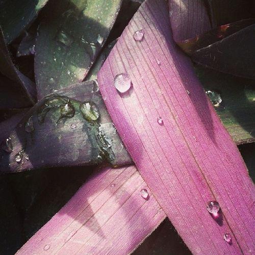 Pinkpurplegreen Water Drop Fakulte bitkileri labsinavindan