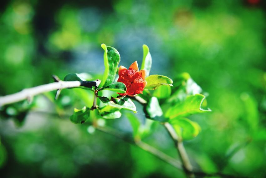 Flower Nature Green Color Beauty In Nature Freshness Beauty Growth Plant Red