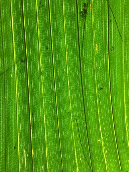 Green Color Leaf Nature Beauty In Nature