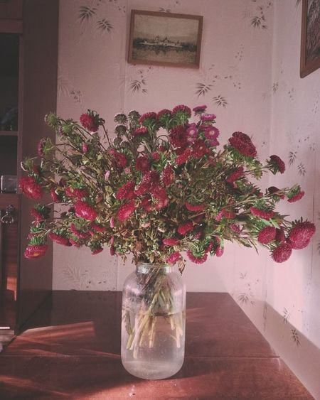 Botanical Flowers, Nature And Beauty No People Vintage Vintage Photo Vintage Style Jar Pink Colors Pink Filter Flowers Plants And Flowers Pink Wall Picture Old-fashioned Soviet Style Soviet Union Grandma House Bouquet White Background Shadow Flower Water Vase Close-up Plant Plant Life
