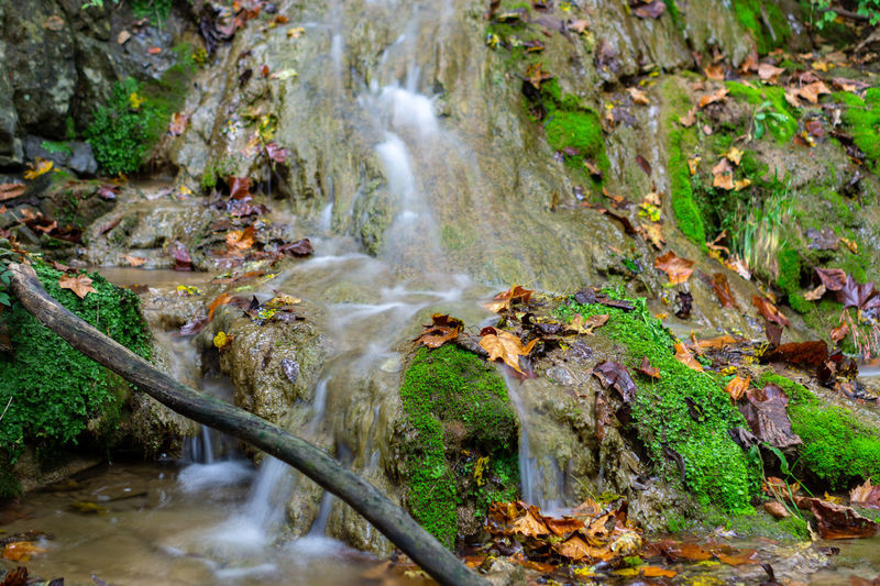 Signs of fall Fall Autumn Autumn Vibrant Color Vibe Water Tree Waterfall Power In Nature Motion Forest Moss Long Exposure Landscape Plant Lush - Description Stream - Flowing Water Flowing Rock - Object
