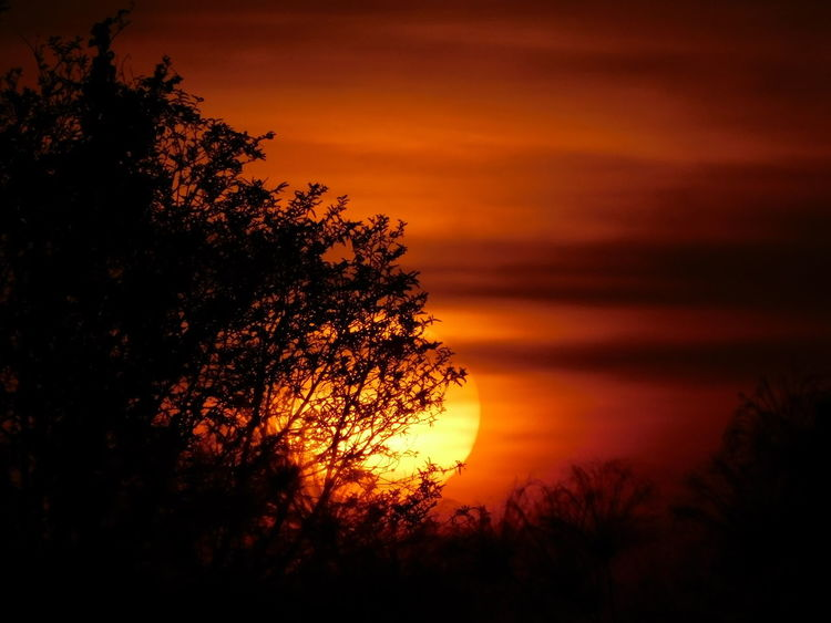 Sunset Tree Orange Color Nature Beauty In Nature Silhouette Dramatic Sky Scenics Sky Tranquil Scene Tranquility Sun Outdoors No People Landscape Moon Growth Astronomy Close-up Perspectives On Nature Sunset_collection Unbelievable Sunset Awesome Sunset Amazing Sunset Rare Sunset