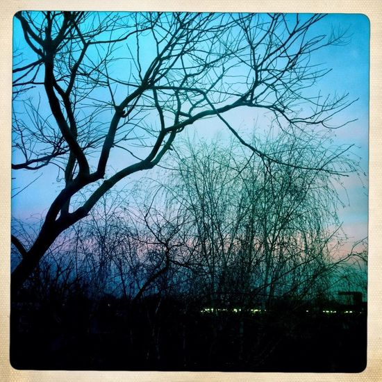Early morning watercolour sunrise a couple of days ago in Peckham London. #blue & #pink #watercolour #sunrise #sky #garden #view #trees #peckham #london Urban Nature Mother Nature Eye4photography  Trees Pink Blue Skyscape Silhouette Silhouettes Silouette & Sky Morning Sky Morning Morning Light No People Nopeople Sky Daylight Natural Beauty Natural Light