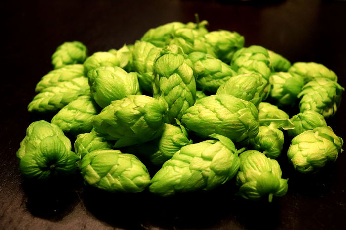 Fresh hop cones close-up. Lithuanian breed Beer Hop Cones New Harvest Black Background Close-up Food Food And Drink Freshness Green Color Hops Indoors  No People