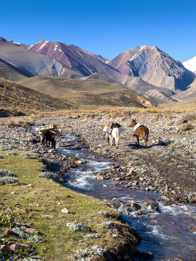 View of the andes mountain range, gaucho with his horse crosses the breakdown