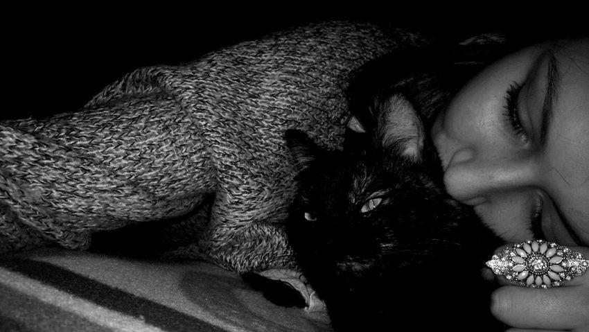 Cat Cute Love Princess Goodanimal Funny Picoftheday Cheese! Followme Bella