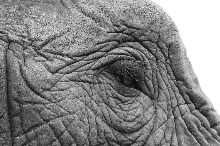 Extreme close up of elephant eye