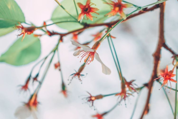 Blossoms  Sunset Tree Flower Branch Autumn UnderSea Leaf Close-up Plant Twig Apple Blossom