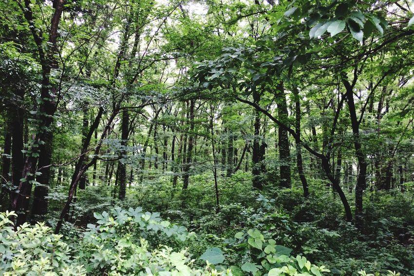 Wooded Area Broadleaf Trees Acorns Walking In The Woods Urban Nature Tokyo Rural Scene