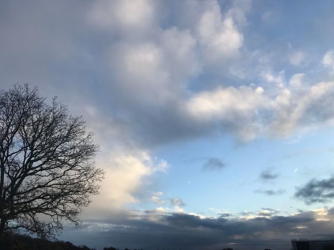 Sky Cloud - Sky Low Angle View Beauty In Nature Nature Tranquility Outdoors No People Tree Tranquil Scene Day Scenics Bare Tree Branch