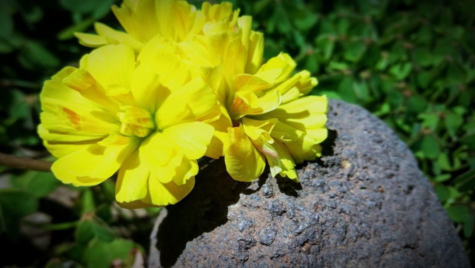 Flower Yellow Close-up Nature Outdoors Day Fragility