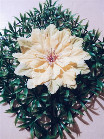 EyeEm EyeemPhilippines Eyeemphotography Walldecoration Flower Close-up Beauty Pattern