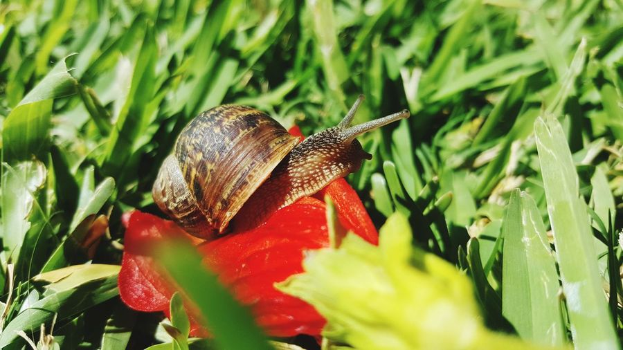 One Animal Close-up Nature Outdoors Day Beauty Snail Leaf Pureair