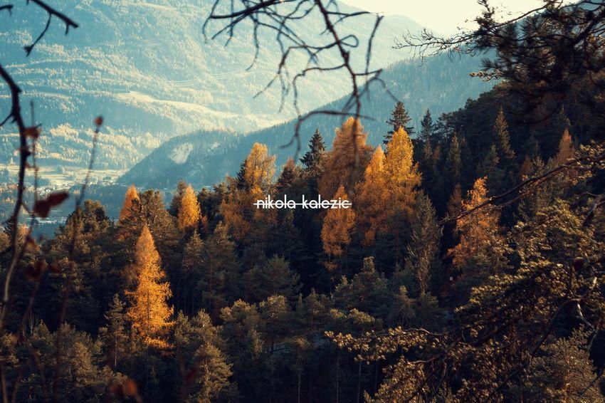 My name - Nikola Kalezic - Architekt, Photographer and Artist 😝 NK Nikolakalezic Photography Photo Tree Mountain Autumn Nature Forest