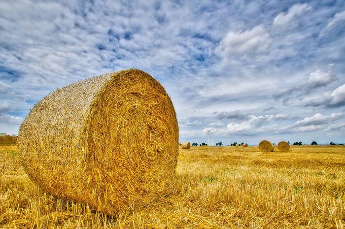 EyeEm Selects Field Sky Landscape Farm Strohballen HDR GERMANY🇩🇪DEUTSCHERLAND@ Büren A.a. Nikond7000 Sigma1020 Colors Sommerfeeling Summer