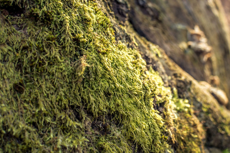 No People Plant Moss Green Color Close-up Day Growth Nature Tree Focus On Foreground Beauty In Nature Rock Outdoors Rock - Object Selective Focus Textured  Land Tranquility Solid High Angle View Lichen