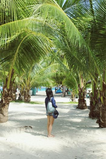 palms over me 😍 Rear View Full Length Tree Walking One Person Leisure Activity Beach Palm Tree Outdoors Nature Sand Day Beauty In Nature People Vacations Real People Water Adult Adults Only EyeEm Best Shots - Nature Tourist EyeemPhilippines Palm Tree Remote Summer Sommergefühle