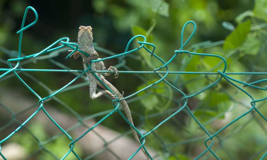 Close-up of insect on chainlink fence