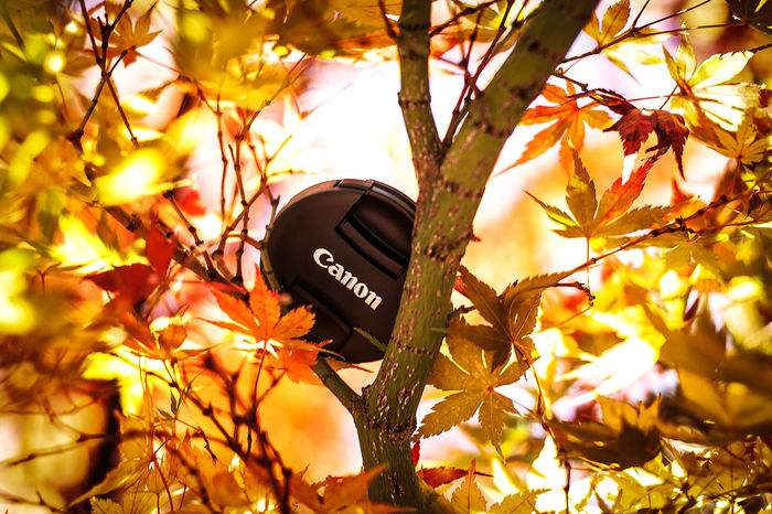 #Canon #EyeEmNewHere #autumn #brand Autumn Branch Communication Growth Leaf Nature No People Tree