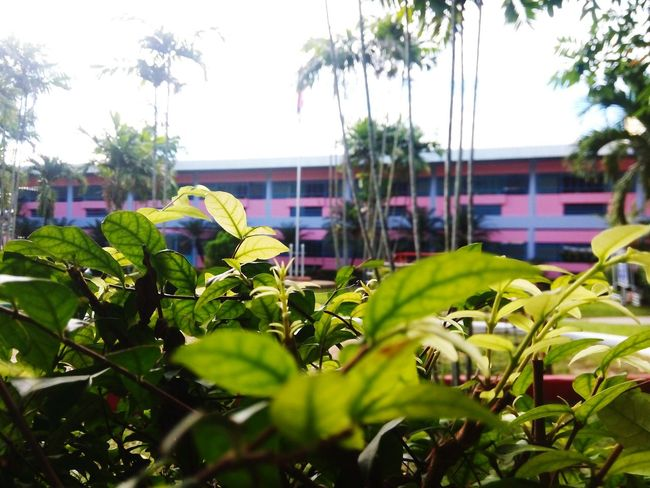 Plant Leaf Nature Community Garden Greenhouse Freshness My School~~