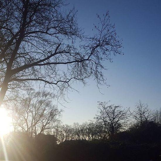 Gestern morgen 😍 Beste Wetter für Fotos 😍 Sun Morning Goodmorning Handyfoto Hellowinter Winter Winterwonderland Cold Lifestyle Lifestyleblogger Lifestyle Bloggergram Bloggers Photoblogger Photography Duisburg Ruhrpottblogger