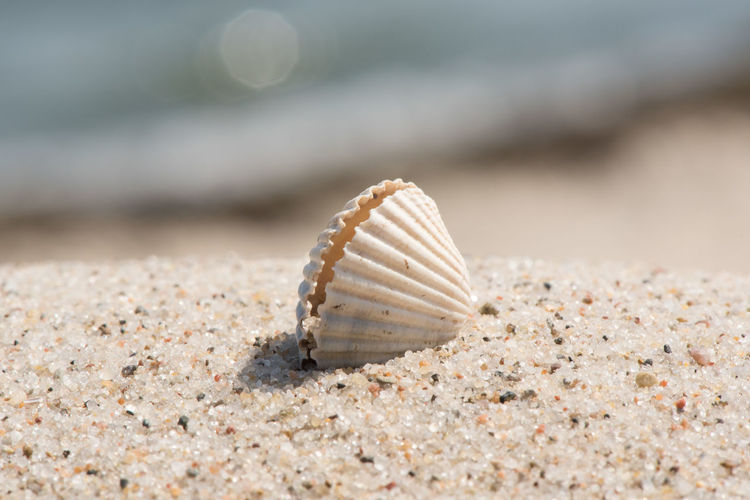 Summer vacation feeling - seashell at sunny beach Macro Beauty Macro Photography Animal Animal Shell Animal Wildlife Animals In The Wild Beach Beauty In Nature Close-up Day Land Macro Macro_collection Marine Nature No People One Animal Outdoors Sand Sea Seashell Selective Focus Shell Surface Level Water
