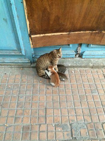 Streetphotography Cats Street Animals