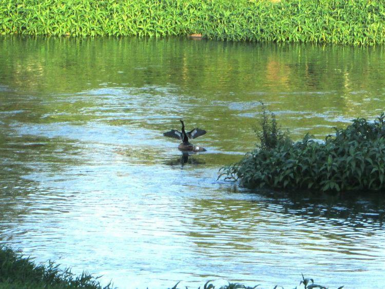 Banho de sol!!! Passaro Birds Rioparaibadosul River Eye4photography  EyeEm Best Shots EyeEm