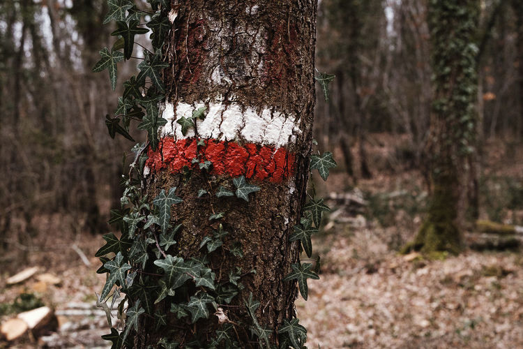 Autumn Autumn colors Hiking Nature Red Tree Beauty In Nature Branch Close-up Day Focus On Foreground Forest Growth Hiking Adventures Hiking Trail Hikingadventures Hiking❤ Nature No People Outdoors Painted Sign Trail Tree Tree Trunk White