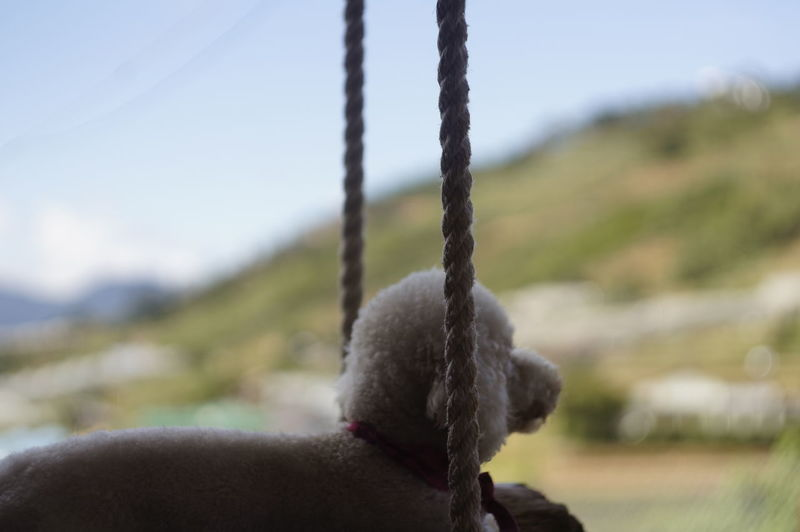 Close-up Day Focus On Foreground Hanging No People Outdoors Rope Sky Strength