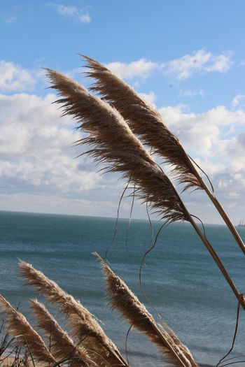 Scenic view of feather and sea against sky
