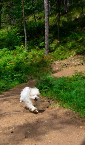 Portrait of dog on road in forest