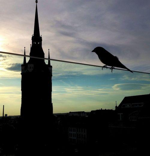 Architecture Marktplatz Like A Bird Halle (Saale)