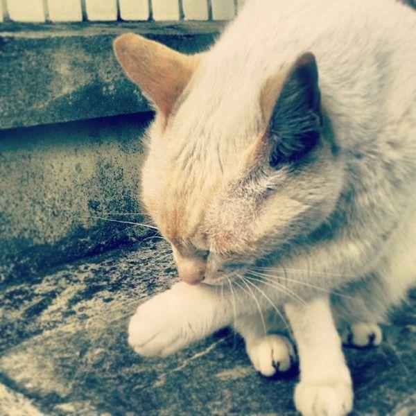 貓星人 竟然不吃我買的食物!! 害我這麼擔心妳